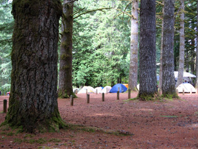 trees and tents