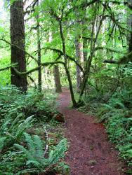 trees on hike