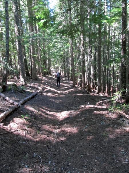Keivn walks through forest