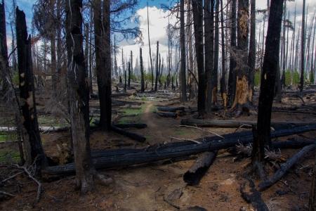 Pole Creek fire area 02