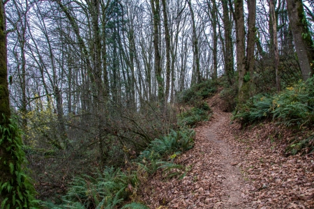 trail and trees