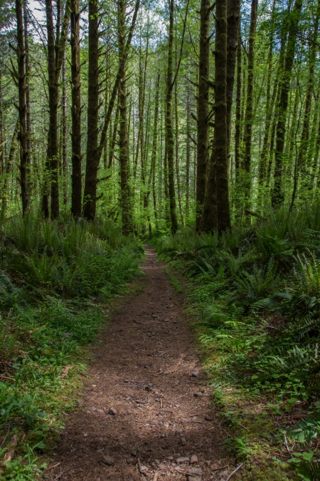 Kings mountain level trail