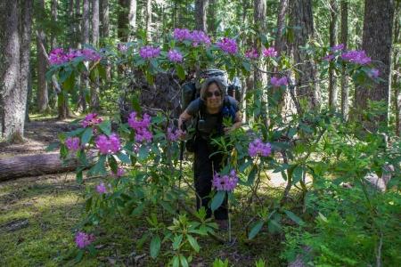 Ann rhododendron