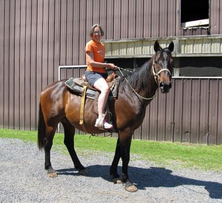 Horse Ann