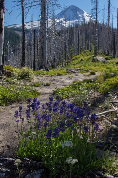 Pollalie Ridge Trail 01