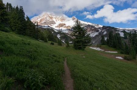 Yocum Ridge Meadow view