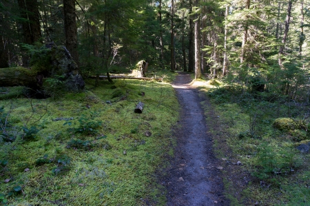 Lower mossy trail