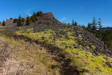 Ridge Moss
