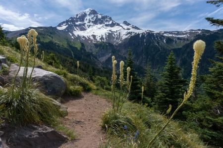 Bald Mountain Bear Grass View
