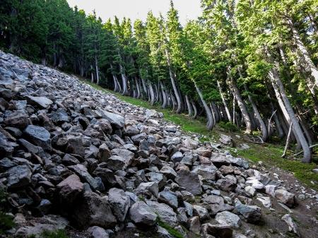 37 sideward trees