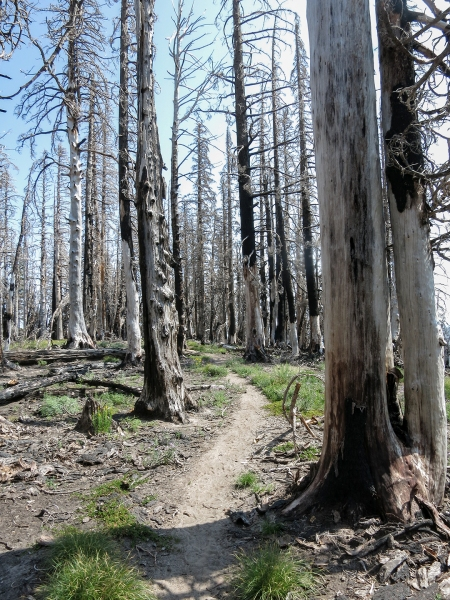 39 Trees around Dollar Lake Fire