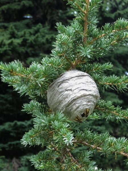 50 nest