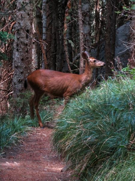 64 Deer