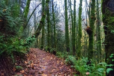 Anns trail moss
