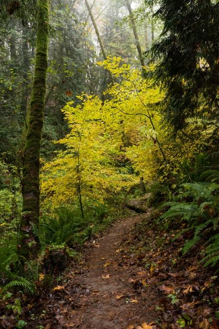 Trail 06