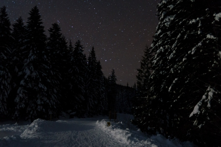 Trillium Lake Trail at night