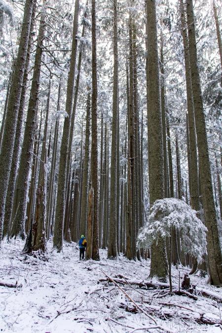 ann snow trail