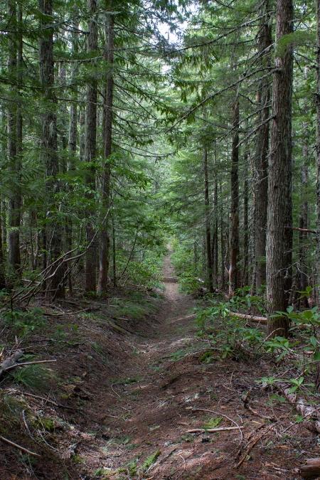 IMG_5211 trees