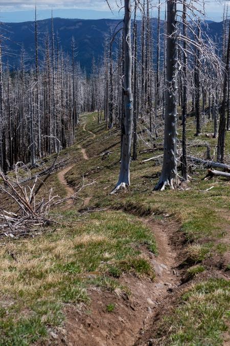 DSC00840 long winding trail
