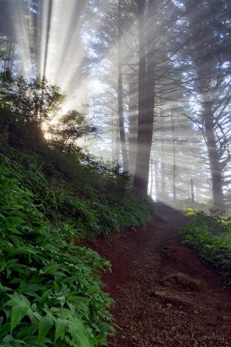 DSC09474 trail sun